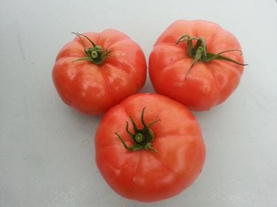Freezing Tomatoes the Easy Way