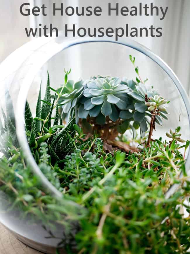 Get Healthy with Houseplants