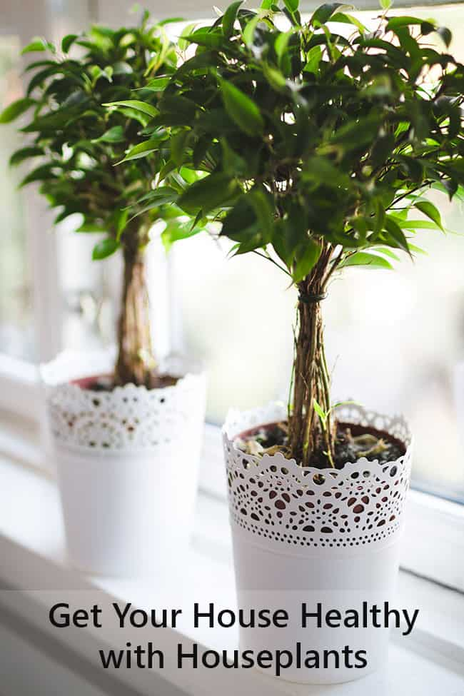 Healthy Living with Houseplants