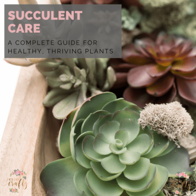 Succulent care – A complete guide to healthy, thriving plants
