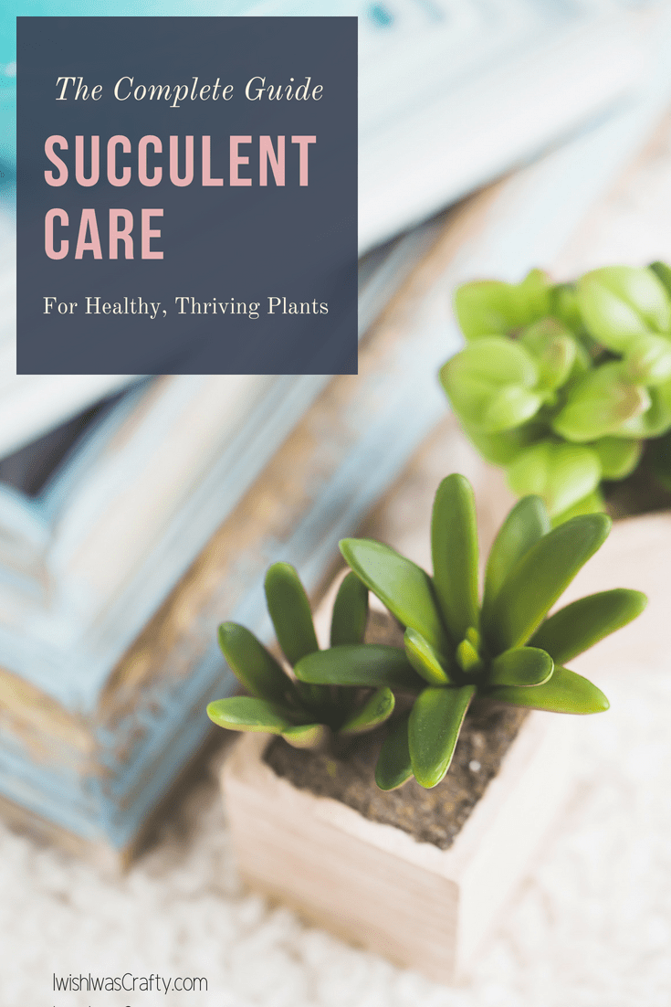 A complete guide to caring for succulents, indoors and outside