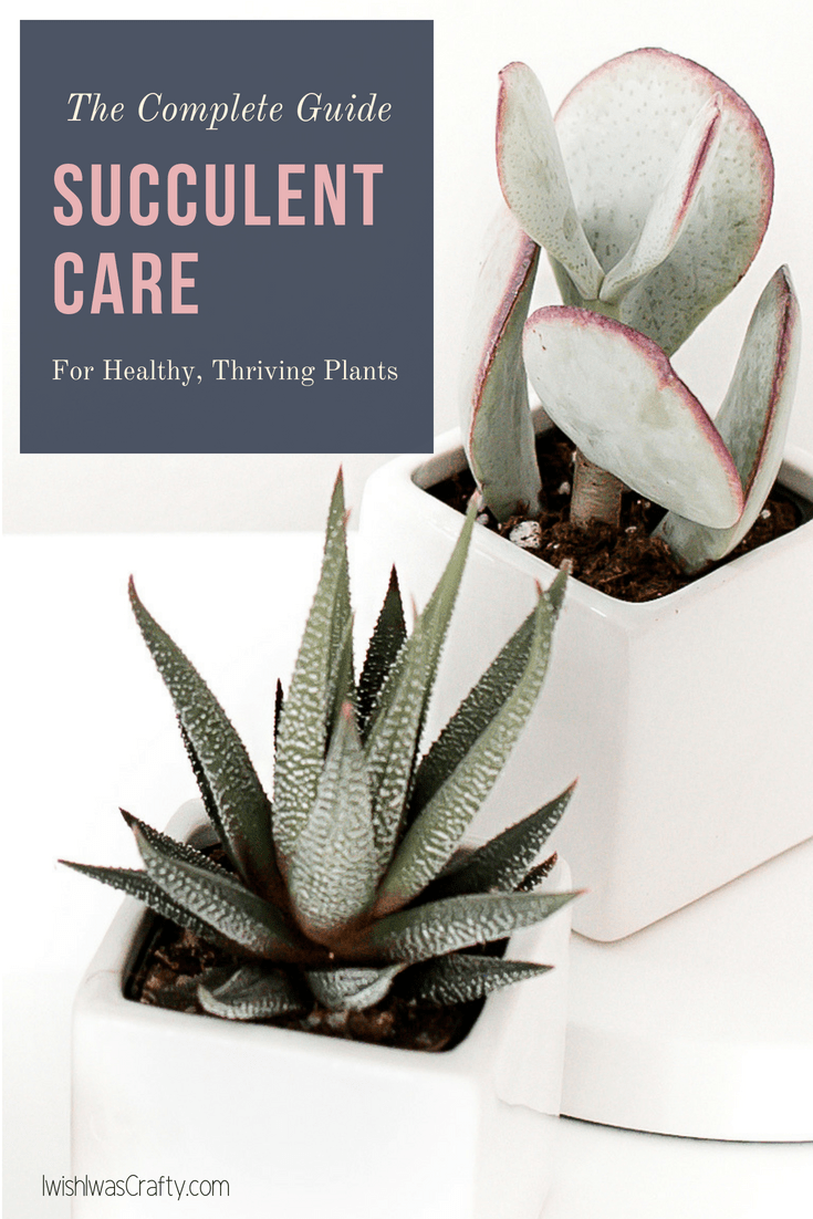 Caring for succulent plants - here is everything you need to know!