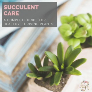 Learn to grow healthy succulents