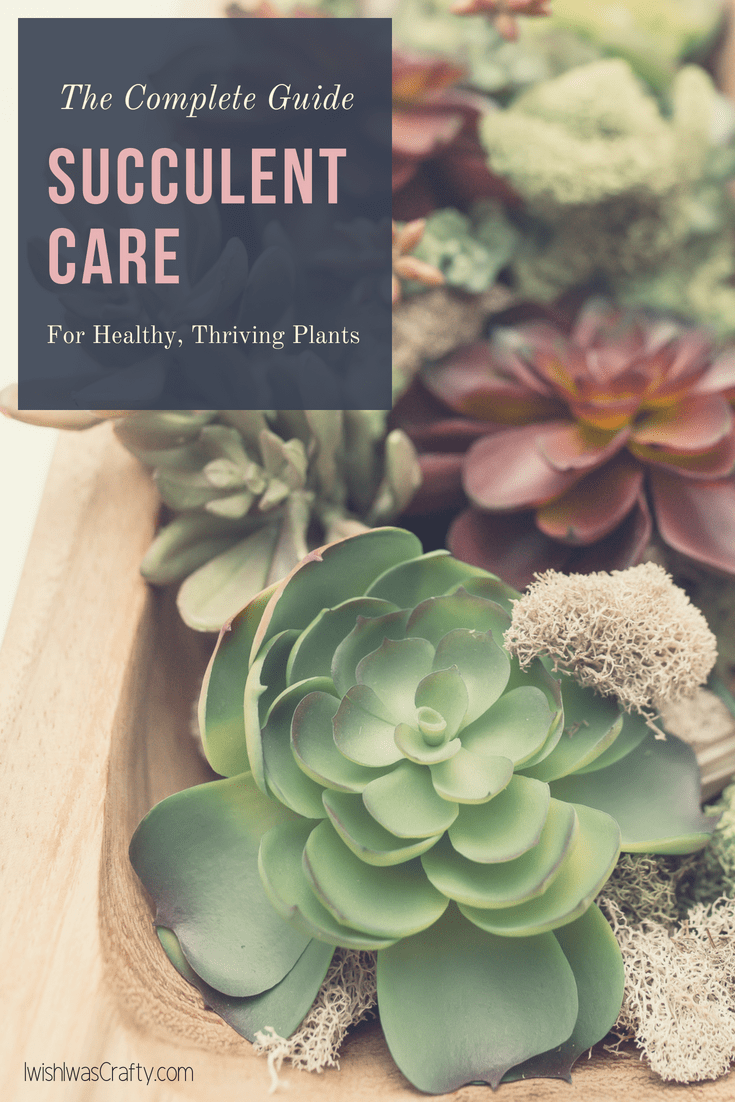 Succulent Care is easier than you think. Don't have a green thumb? No worries, this is your complete guide to healthy, thriving plants.