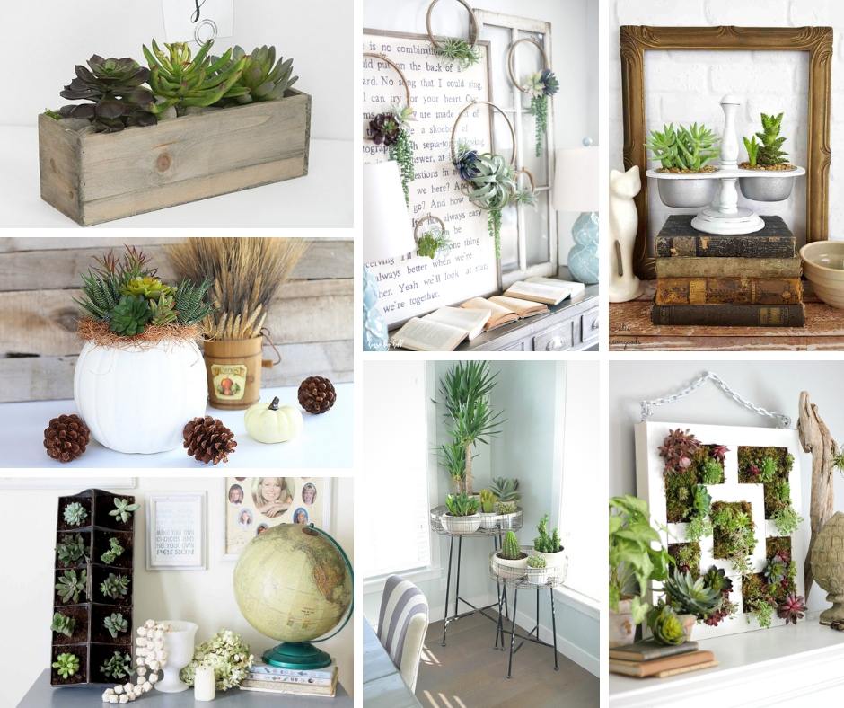 Succulent ideas for home