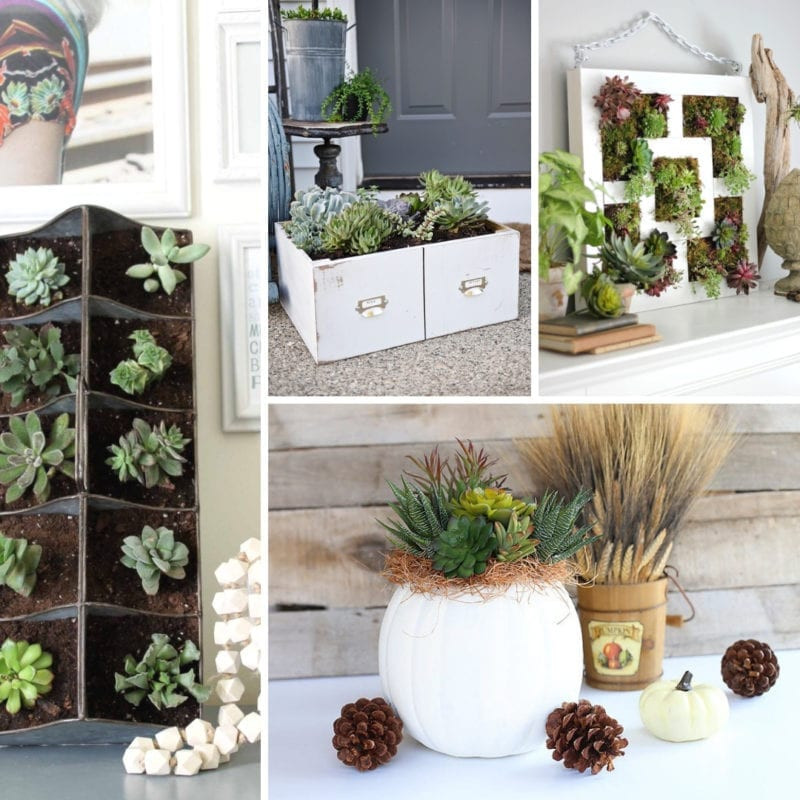 Rustic Decor Ideas Diy: Rustic Succulent Decor Ideas