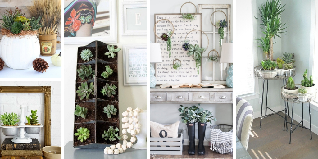 Succulent ideas for home decor